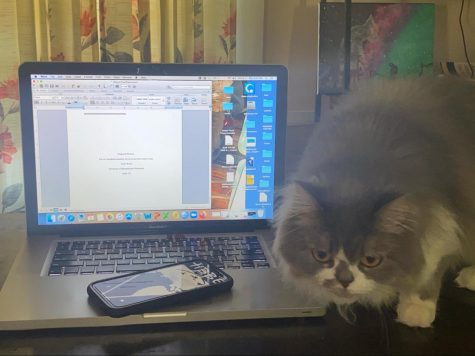 This feline monster is just one of the many distractions that DHS students faced during remote learning this fall.